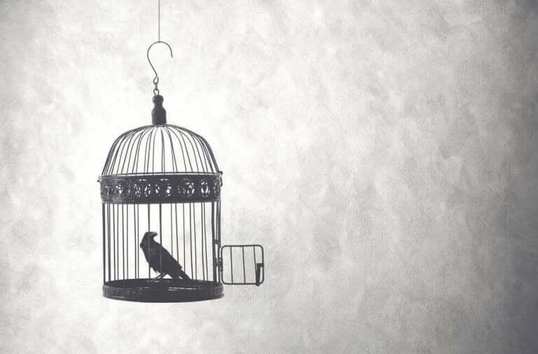 Pássaro em gaiola aberta