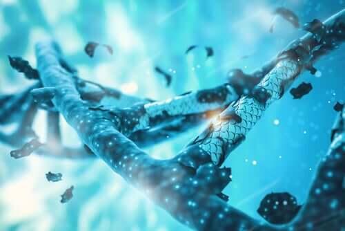Conexões dos genes