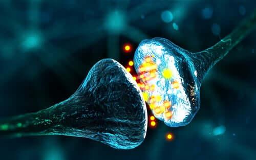 Sinapses de neurônios