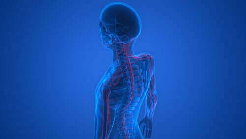 Os nervos do corpo humano