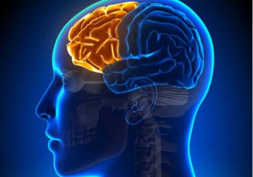 Síndrome disexecutiva: quando o lobo frontal falha
