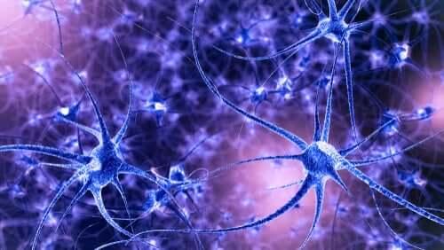 Plasticidade neuronal: características e tipos