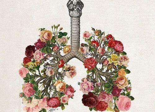 Pulmões de flores