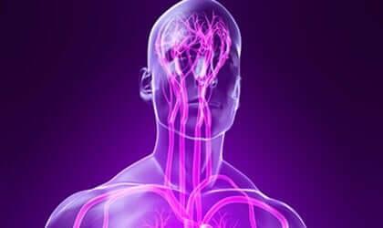 As ramificações do sistema nervoso