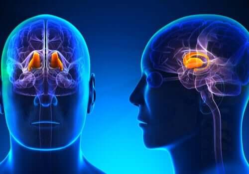 Como o cérebro trabalha para percebermos a dor?