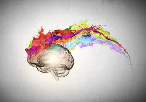 Cérebro colorido demonstrando sinestesia
