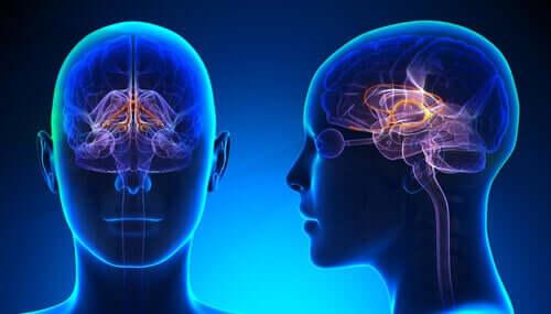 Localização do sistema límbico no cérebro