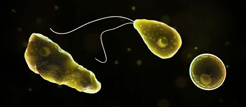 Ameba comedora de cérebros: o que é e como ela pode nos afetar