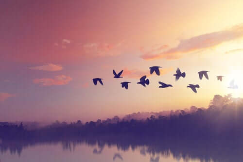 Pássaros voando em grupo