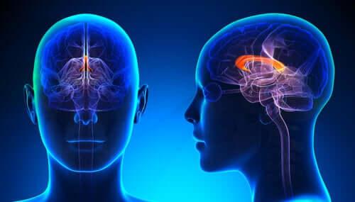 O cérebro das pessoas canhotas