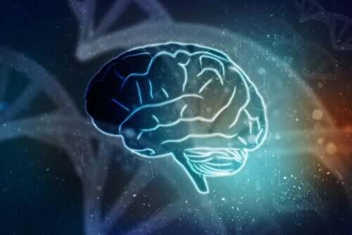 Desenho de um cérebro humano