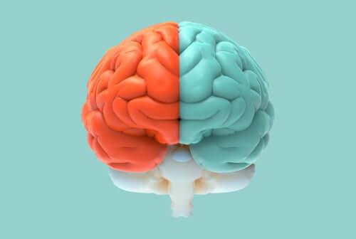 Neuromitos sobre os hemisférios cerebrais
