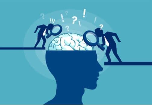 Estudos sobre o cérebro humano