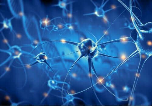 Neurônios cerebrais