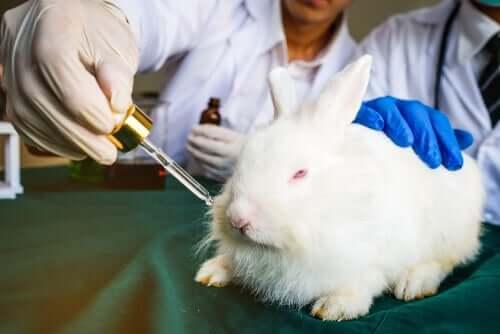 Argumentos contra os testes com animais