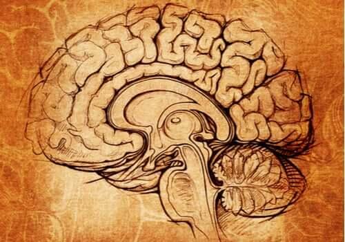 Núcleo lenticular: o centro da motivação e do aprendizado
