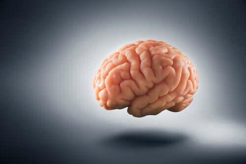 A pobreza muda o nosso cérebro