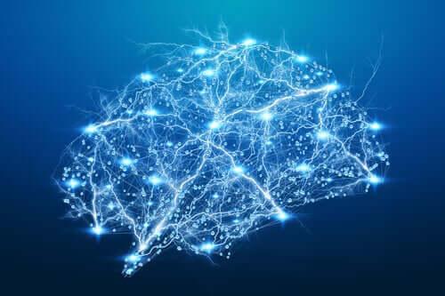 As conexões do cérebro