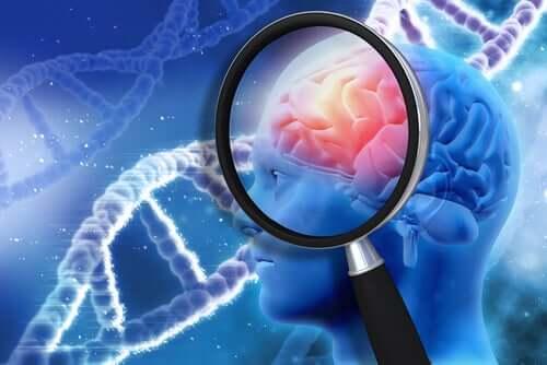 O estudo do cérebro humano