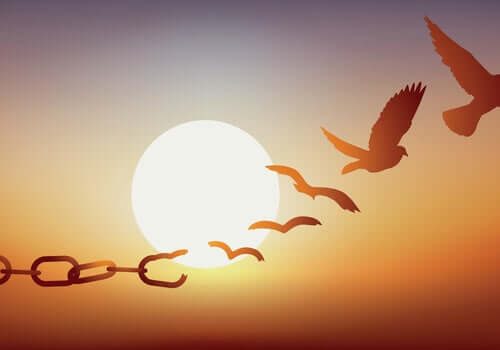 Pássaros rumo à liberdade