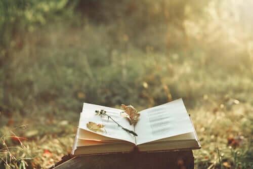 Livro aberto na natureza
