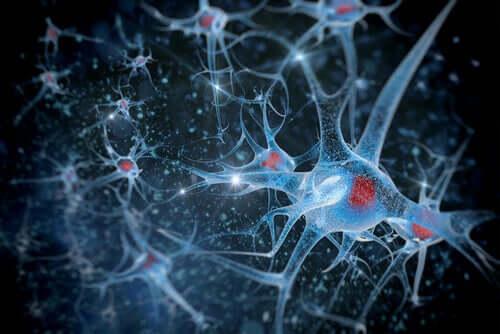Sincronização neuronal