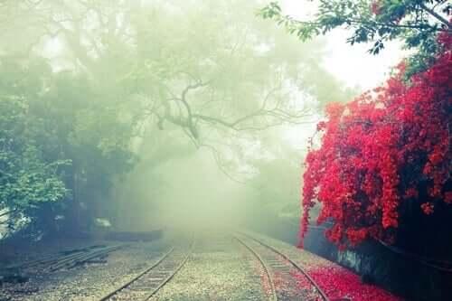 Caminho pelos trilhos de um trem