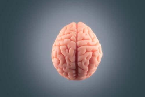 Cérebro diante de fundo cinza