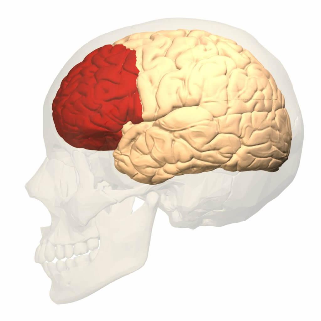Córtex pré-frontal