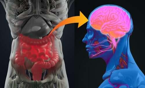 A conexão entre cérebro e intestino