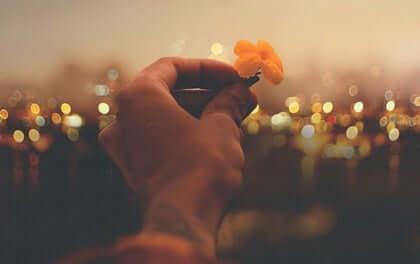 Mão segurando flor