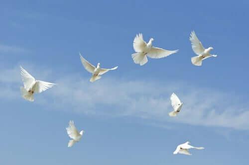Pássaros brancos voando