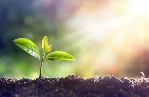 Planta crescendo diante do sol