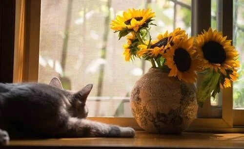 Gato em casa na janela