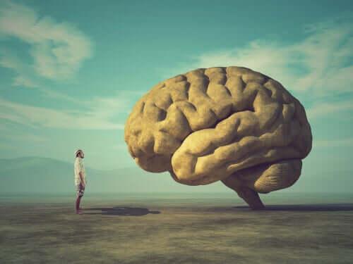 Por que o cérebro é enrugado?