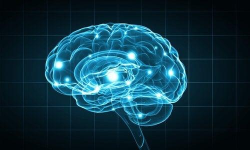 Conexões do cérebro humano