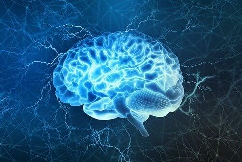 Cérebro humano em destaque