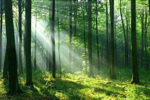 Floresta iluminada