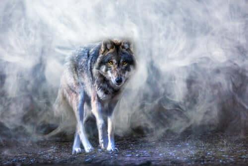 A lenda do lobo Astur, uma história sobre o equilíbrio