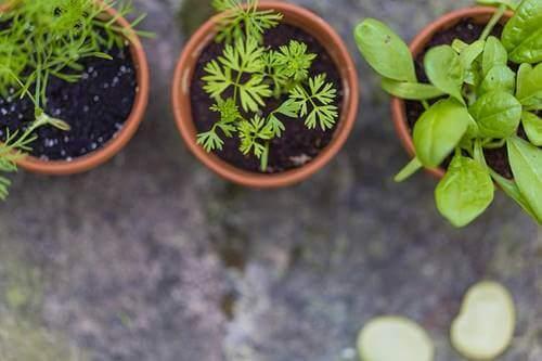 Vasinhos com ervas