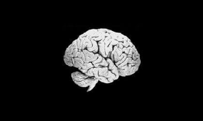 Cérebro humano diante de fundo preto