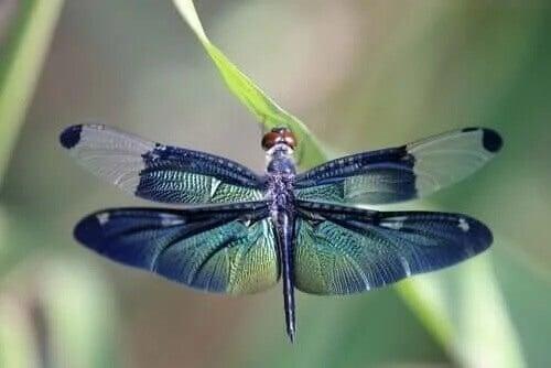 A bela metáfora da libélula e os ciclos da vida