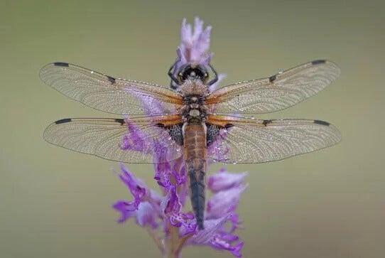 A metáfora da libélula e o ciclo da vida