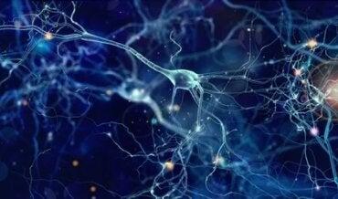 Neurônios de von Economo: funções e características