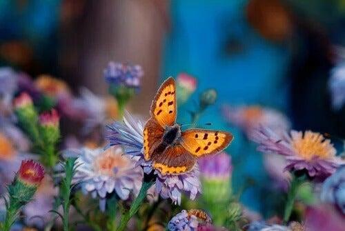 A flor mais bonita do jardim, uma história japonesa