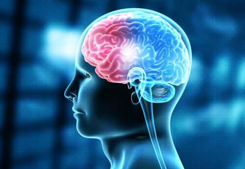 Os danos sofridos pelo cérebro