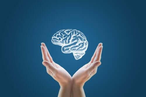 Minicérebros criados em laboratório: o início da clonagem humana?