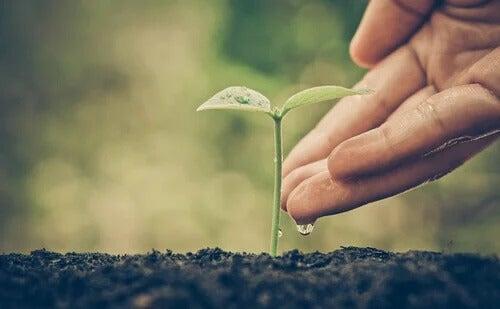 Planta nascendo