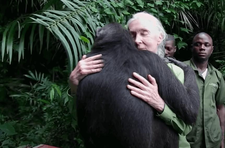 Biografia de Jane Goodall, de pesquisadora a referência mundial