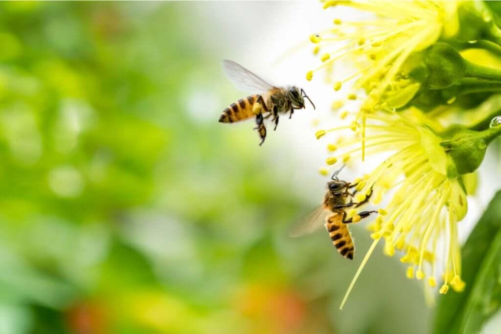 O medo de abelhas ou apifobia